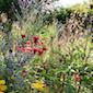 Warme winteravond in 't Dijleland : Natuur in je tuin