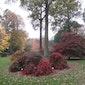 Bezoek Arboretum Wespelaar