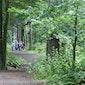 Rustgevende wandeling in het bos