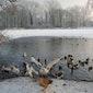 Vogels in de winter 2018