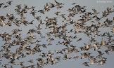 Groot Vogelweekend 2018 - doorlopend boeiende activiteiten in de Uitkerkse Polder