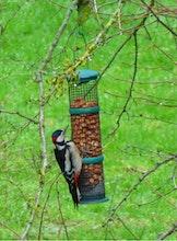 Groot Vogelweekend 2019 - doorlopend boeiende activiteiten in het bezoekerscentrum 10u tot 17u