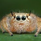 Lezing: Kennismaking met spinnen (Steendorp)