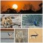 Fotoavond India, leeuwen, tijgers, luipaarden en veel meer...