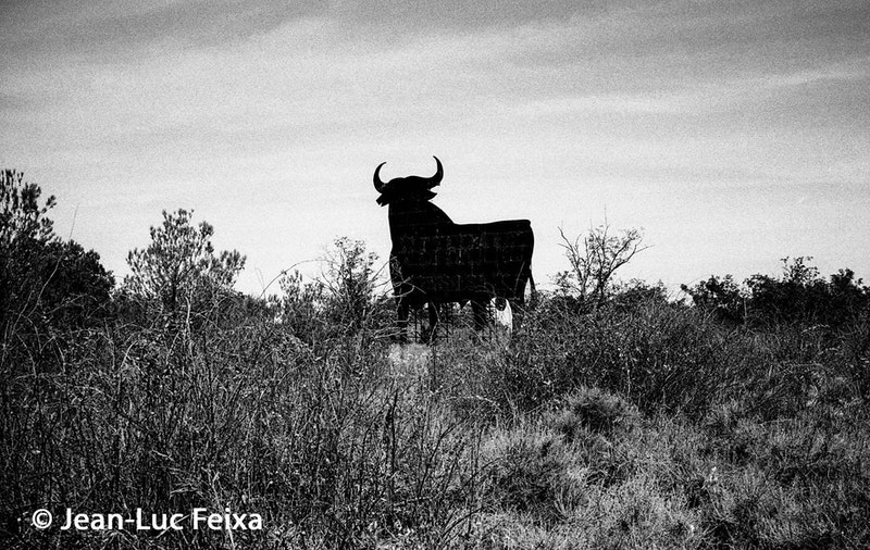 billboard van een stier in het groen