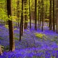 Bezoek aan Colruyt (Logistieke keten en duurzaam ondernemen) en het Hallerbos wanneer de blauwe boshyacinten bloeien.