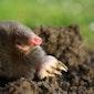 Hoe omgaan met natuurlijke belagers in onze tuin?