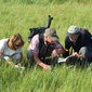 Werkgroep Natuurstudie MONITORING & INVENTARISATIE
