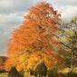 Seizoenswandeling - beleef en proef de herfst - VOLZET