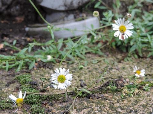 Natuur in de Buurt – Groen in Grijs