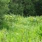 Planten, insecten en waterbeestjes in het Viersels Gebroekt