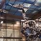 Iguanodons en mosasauriërs