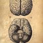 SOS Brein: mindmapping en geheugentraining