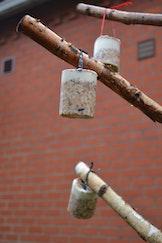 Maak vetbolletjes voor je tuinvogels (7-12 jaar)