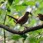 Lezing: De wondere wereld van de vogels (Ham)