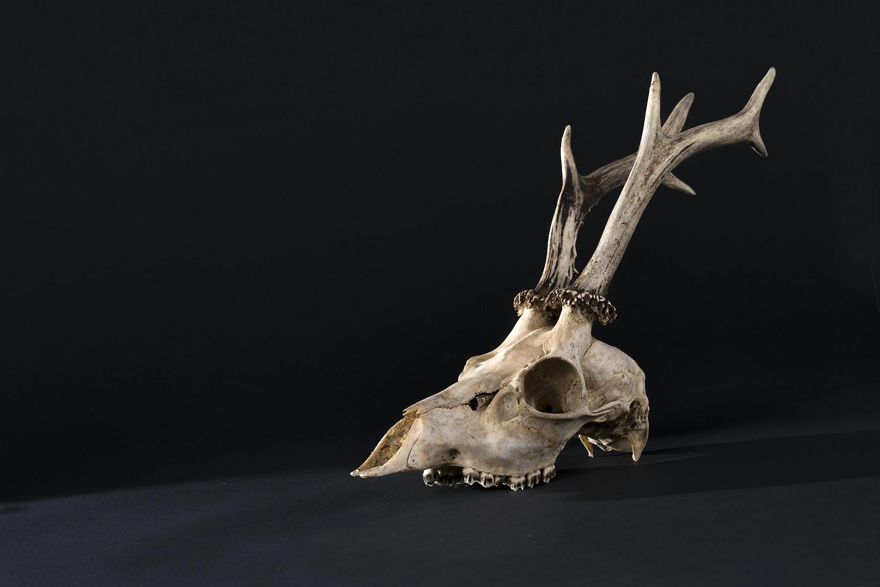 bezoek museum morfologie Merelbeke