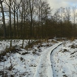 Winterwandeling in de Wellemeersen