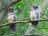Fietstocht: op zoek naar roofvogels in het kerngebied van de Uitkerkse Polder