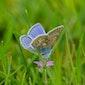 Vlinders in Raversyde