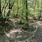 Lentewandeling in het Bronnenbos