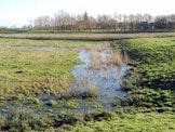Beheer in de polders