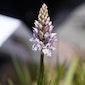Planteninventarisatie in de Reukens