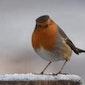 Vogelgeluidenwandeling in de vallei van de Grote Beek