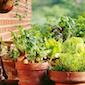 Potverse groenten uit je eigen minimoestuin