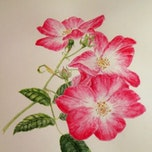 Workshop botanisch tekenen/aquarel - rozen