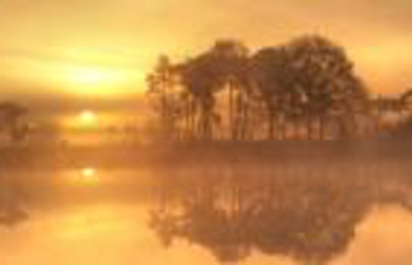 Begeleide natuurwandeling in het Turnhouts Vennengebied