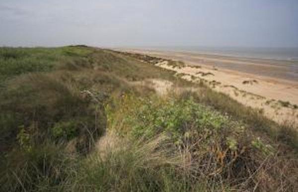 Bos- en strandwandeling: Via het strand naar het ontstaan van het duin