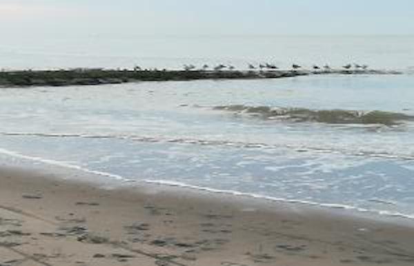 Het strand op zijn breedste: wat groeit er op het strandhoofd?