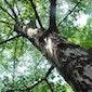 Keltische bomenhoroscoopwandeling Rivierenhof