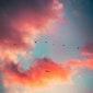 Vogeltrektocht (Hageven)