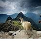 Online: Machu Picchu en oud-Peru