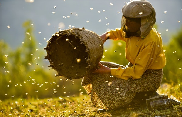 Honeyland (Sembènecinema)
