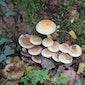 Paddenstoelen zoeken in het bos van Nieuwenhoven