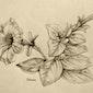 Botanisch tekenen in het Hageven