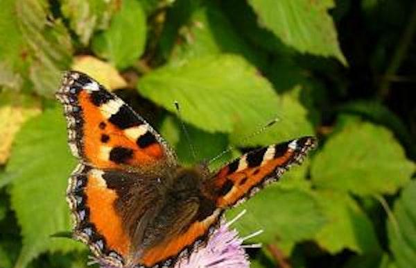 Wandeling in de Roost: Vlinders en libellen zoeken