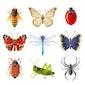 Lezing: Lang leve de insecten! (Hasselt)