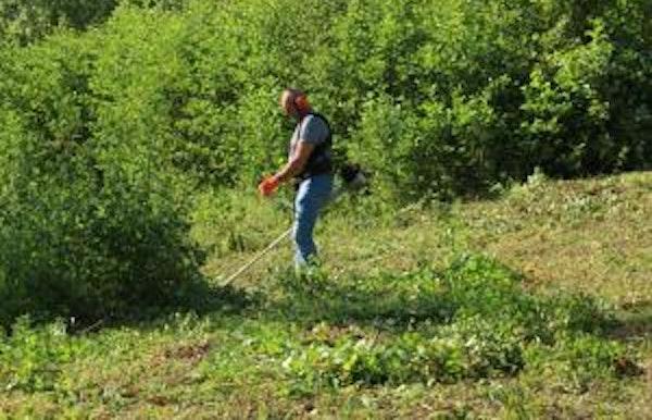 Beheerwerken: maaibeheer Braebos boomgaard