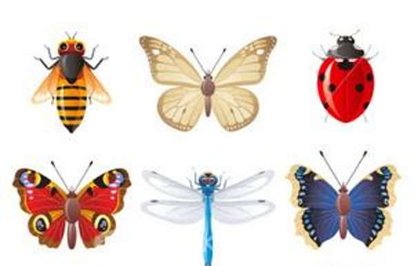 Lezing: Lang leve de insecten! (Lille)