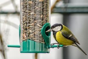Op zoek naar winterse vogels