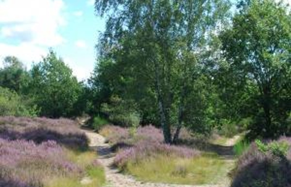 Heidewandeling in Malesbroek/de Hutten en de Keyfheide