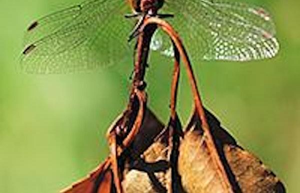 Wandeling in de Maten: Bewonderen libellenvlucht