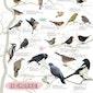 ONLINE LEZING: Vogels in de tuin (Hechtel-Eksel)