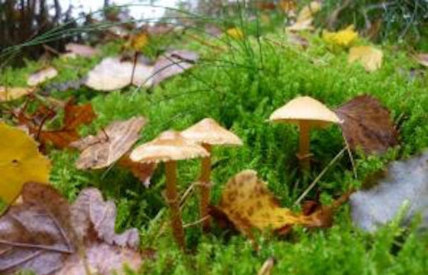 Herfstige natuurwandeling in de Vallei van de Zwarte Beek