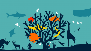 Jeugdactiviteit JNN: World Wildlife Day!