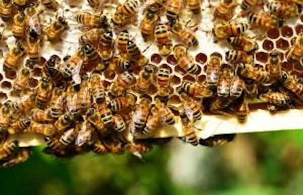 Bijzondere Bijen Belevenis voor jong én oud!