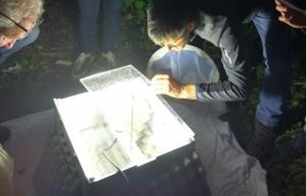 Determineren en loslaten van de 's nachts gevangen insecten (nachtvlinders)